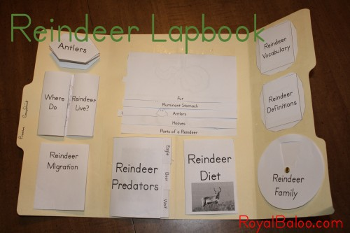Reindeer Lapbook