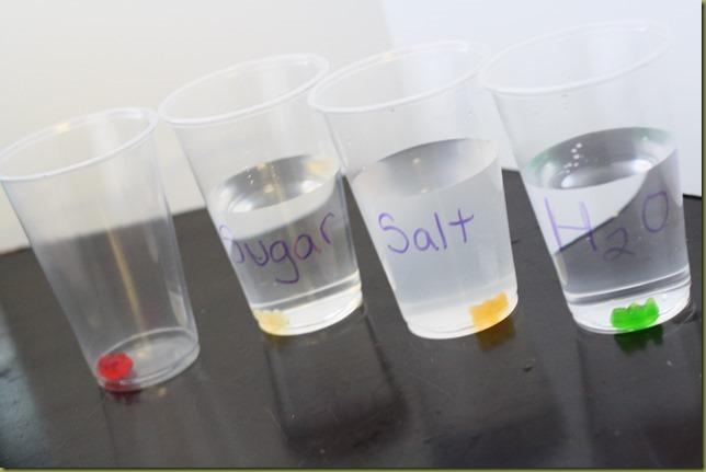 Gummi Bear Science Experiments