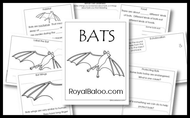 BatUnityStudy