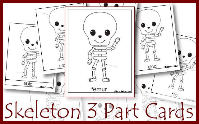 skeleton3partcards