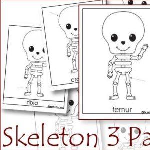 skeleton3partcards_thumb.jpg