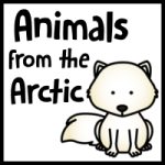 Arctic Animal Update K-2nd