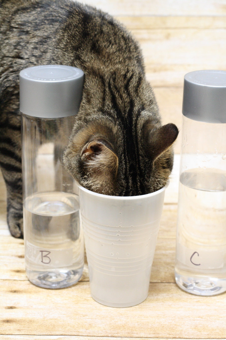 3 Easy Steps to Setting Up a Science Experiment for Kids
