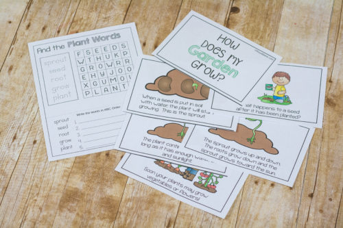 Learn about germination of a seed or how a seed grows into a plant. The entire process is laid out in the simple easy reader booklet for K-2nd!
