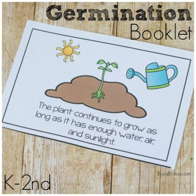 Germination or Life Cycle of a Plant Booklet
