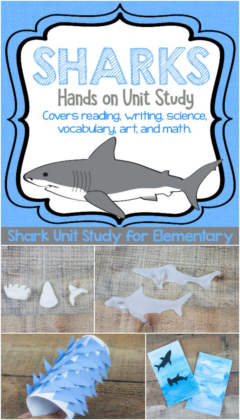 Ready to learn about sharks using hands on and memorable activities? Look no further, it's all planned out for you here in this engaged shark unit study!
