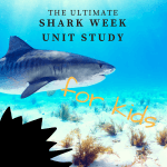 Ultimate Guide to an Awesome Shark Week