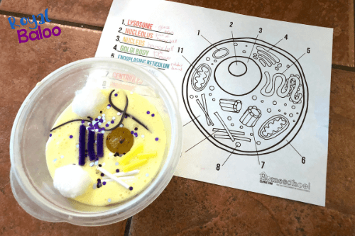 animal cell made from slime