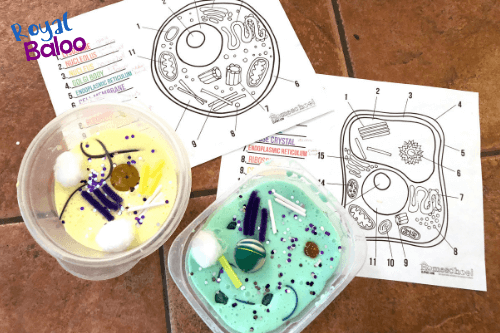 animal and plant cells made of slime