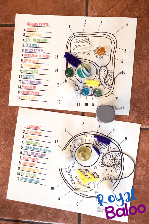 cell worksheets with materials to represent different parts